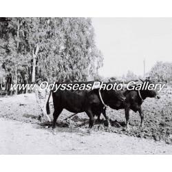 Old Polis Photo D1030015